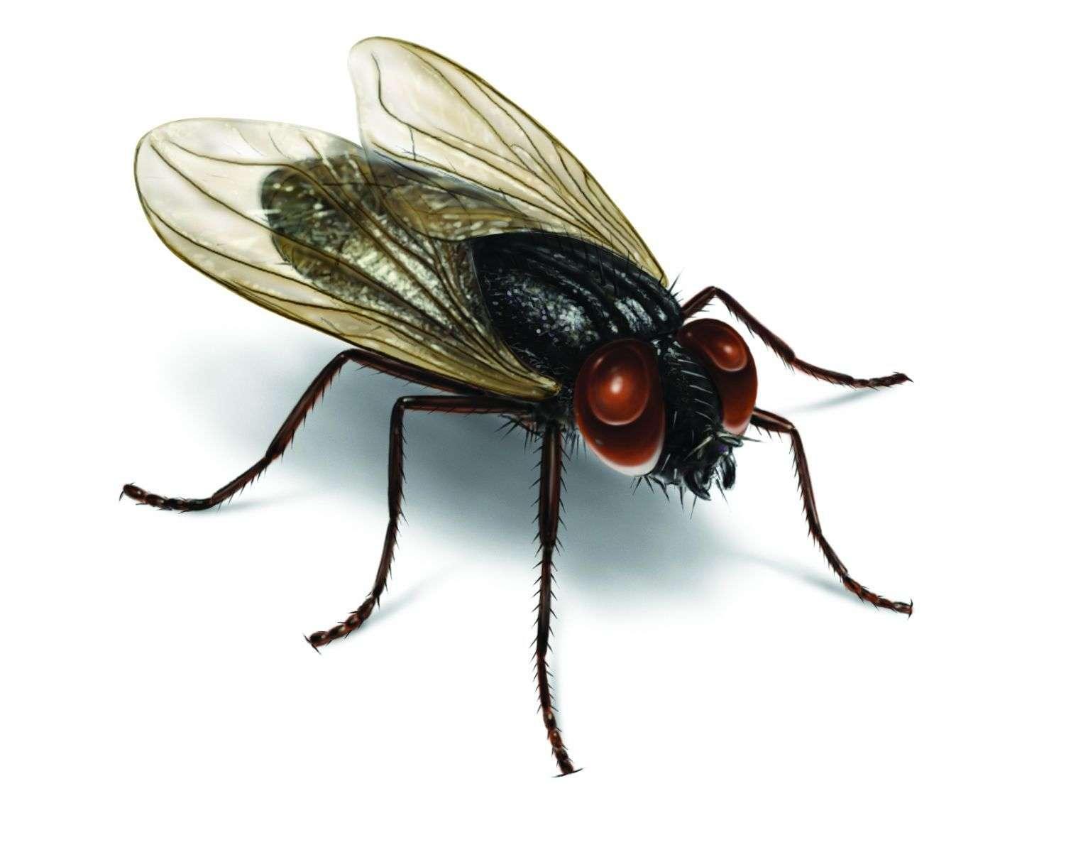 İlkel memeliler: hayvan böcek ilacı